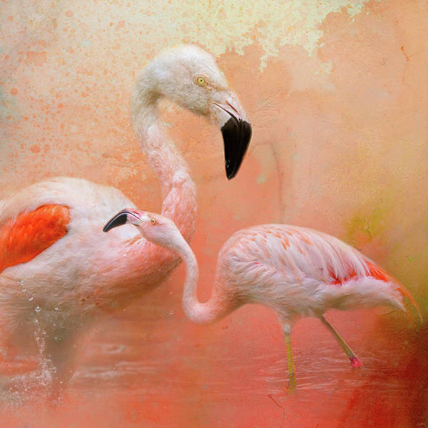 Photograph - The Flamingos by Jai Johnson