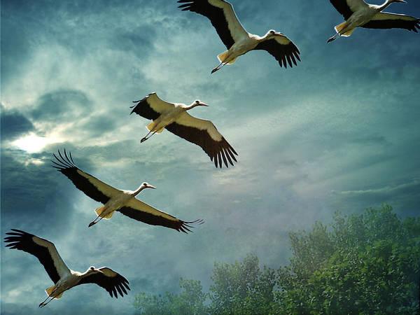 Friuli Photograph - The Flight by Dima Lauzzana