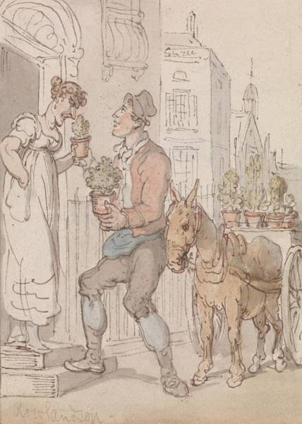 Drawing - The Flower Seller by Thomas Rowlandson
