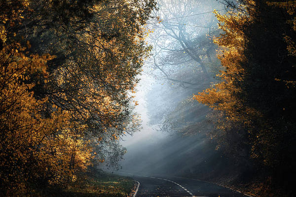 Photograph - The Foggy Autumn Road No 1 by Chris Fletcher