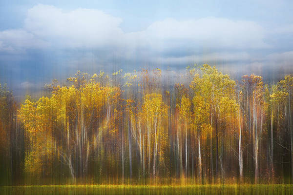 Photograph - The Forest Awaits Dreamscape by Debra and Dave Vanderlaan