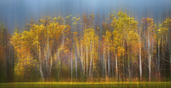 Photograph - The Forest Awaits Dreamy Panorama by Debra and Dave Vanderlaan