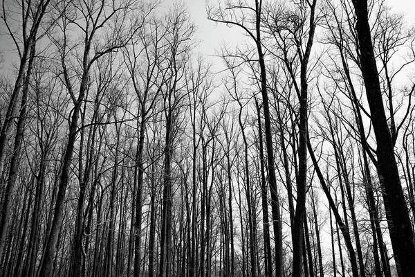 Photograph - The Forest In Black And White by Bill Cannon