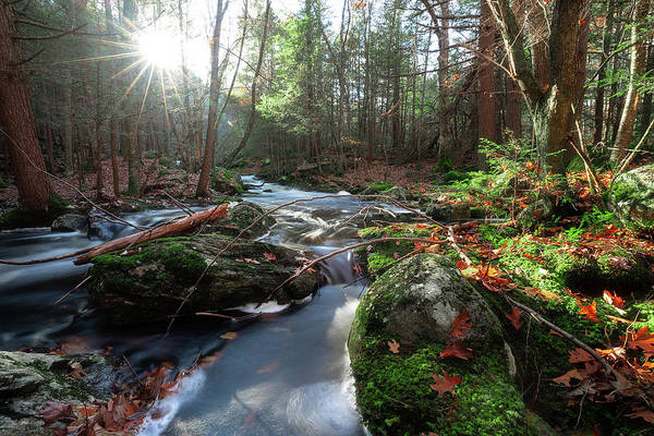 Photograph - The Forest Stream by Brian Hale