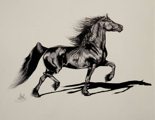 Friesian Drawing - The Freisian Mare by Cheryl Poland