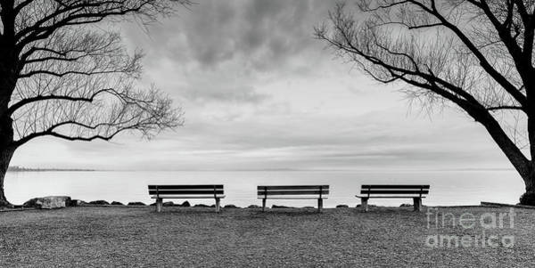 Three Trees Photograph - Front Row Seats by DiFigiano Photography