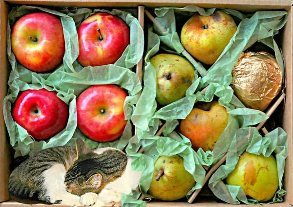 Wall Art - Photograph - The Fruit Gift Box by Diana Angstadt