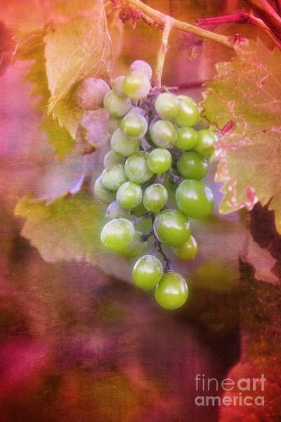 Photograph - The Fruits Of Tuscany by Mary Machare