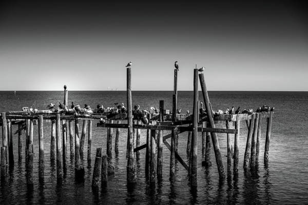 Cedar Key Photograph - The Gathering Cedar Key Florida by Louis Ferreira