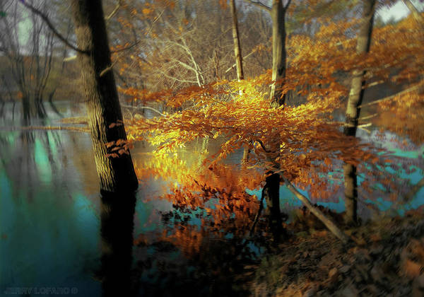 New England Photograph - The Golden Bough by Jerry LoFaro