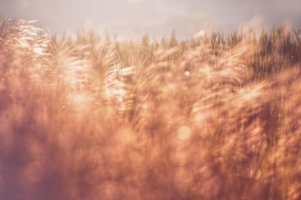 Photograph - The Golden Morning 2 by Jaroslav Buna
