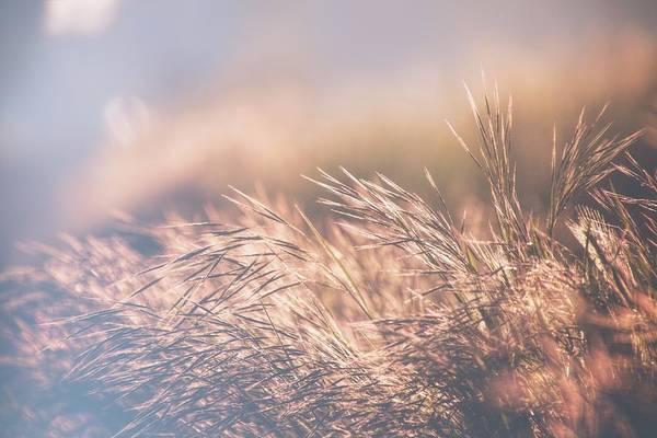 Photograph - The Golden Morning 3 by Jaroslav Buna