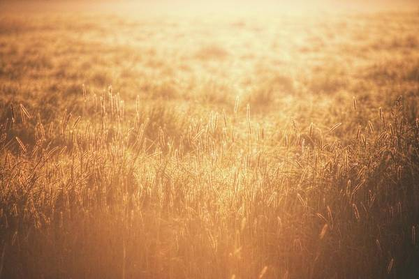 Wall Art - Photograph - The Golden Morning by Jaroslav Buna