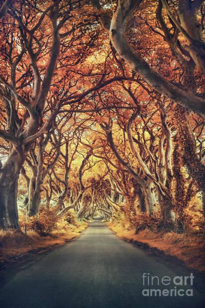 Autumnal Wall Art - Photograph - The Golden Path by Evelina Kremsdorf