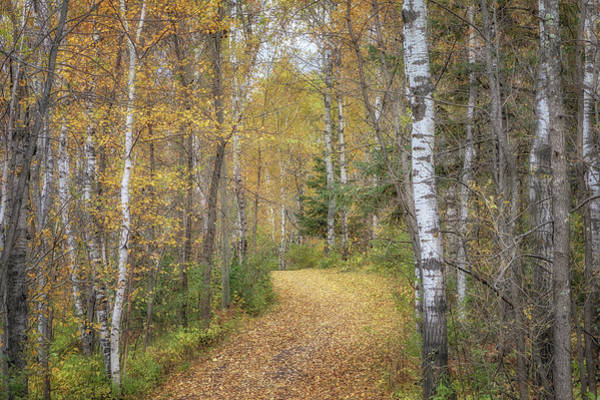 Photograph - The Golden Path by Susan Rissi Tregoning
