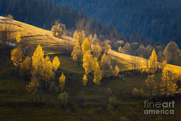 Wall Art - Photograph - The Golden Trees In Low Sun Light Rays by Stone36