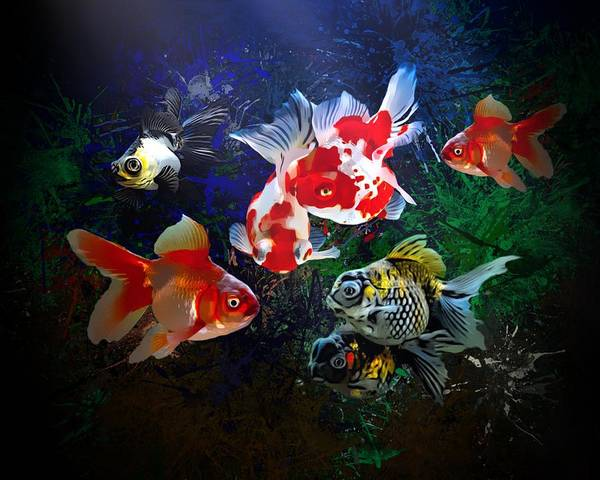 Digital Art - The Goldfish Are Hungry  by Scott Wallace Digital Designs