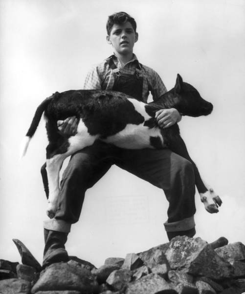Photograph - The Good Cowherd by Erich Auerbach
