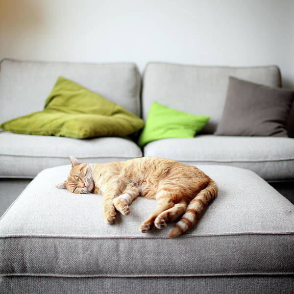Cushion Photograph - The Good Life by Marcel Ter Bekke