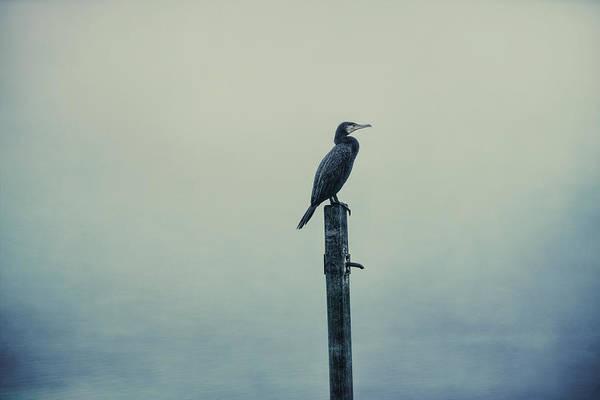 Photograph - The Great Cormorant by Jaroslav Buna