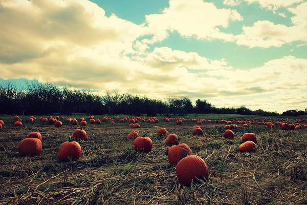Photograph - The Great Pumpkin by Candice Trimble