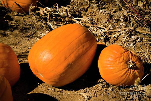 Photograph - The Great Pumpkin by Jon Burch Photography