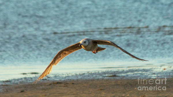 Low Battery Photograph - The Gull Of My Dreams by Sharon Mayhak