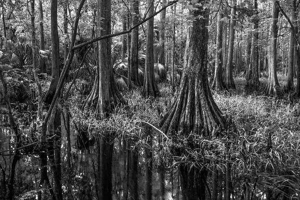 Photograph - The Hammock In Black And White  by Debra and Dave Vanderlaan