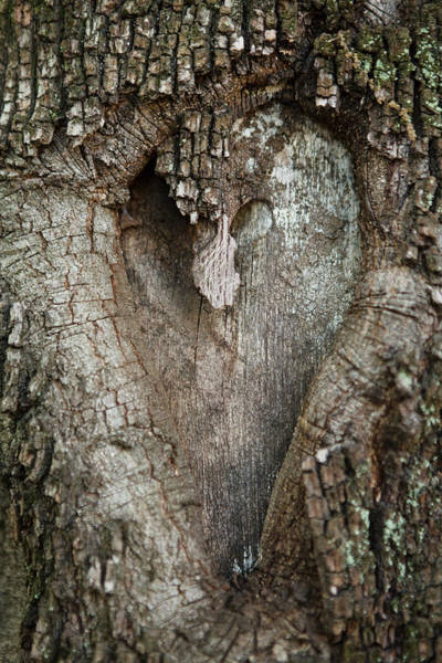 Mfa Wall Art - Photograph - The Heart Of A Tree by Iris Richardson