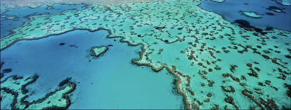 Reef Photograph - The Heart Reef Is Part Of The Great by Simon Bruty