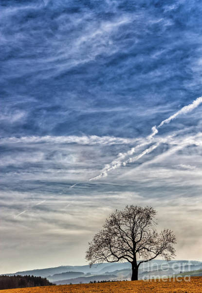 Photograph - Lonely Tree In The Sky by Bernd Laeschke