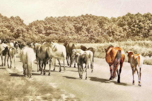 Photograph - The Herd by JAMART Photography