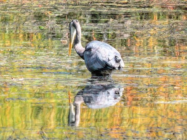 Wall Art - Digital Art - The Heron's Reflection  by Susan Hope Finley
