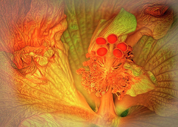 Photograph - The Hibiscus by Barry Weiss