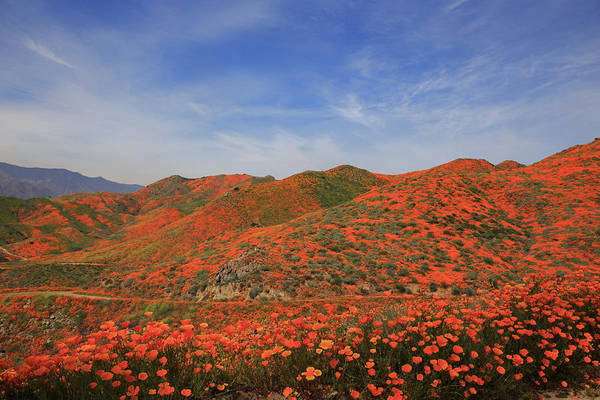 Wall Art - Photograph - The Hills Are Alive With California Poppies by Bridget Calip