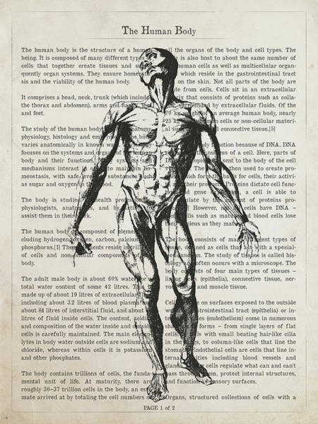 Wall Art - Digital Art - The Human Body Illustation 01 by Aged Pixel