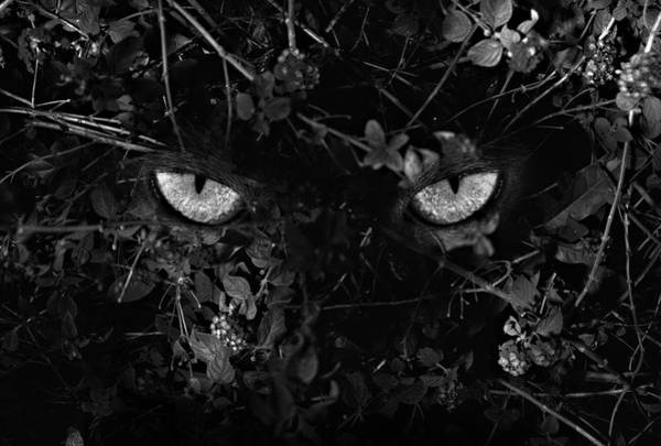 Photograph - The Hunter by Trinidad Dreamscape