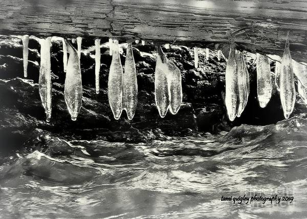 Photograph - The Icing Over The Creek by Tami Quigley