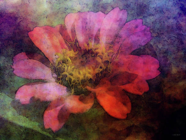 Photograph - The Impression Of Pink Zinnias 9529 Idp_2 by Steven Ward