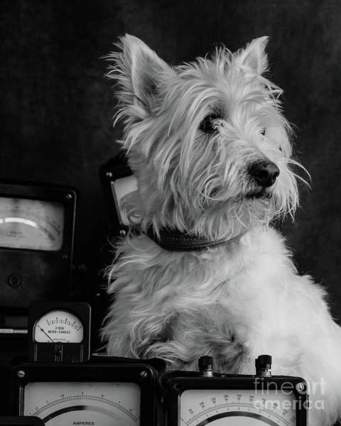 Photograph - The Inventor Dog by Edward Fielding