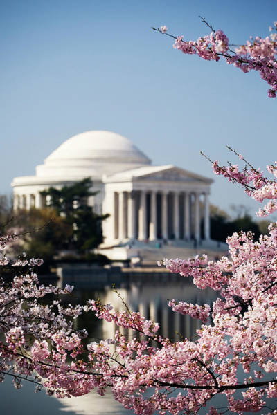 Tidal Basin Photograph - The Jefferson Memorial Framed By Cherry by Uyen Le