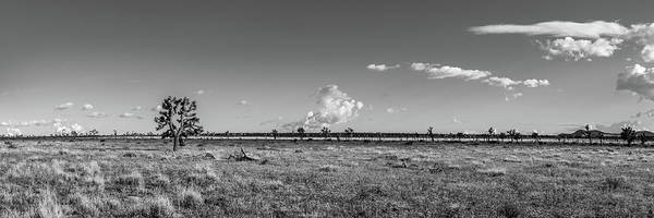 Photograph - The  Joshua Tree Plains - Black And White by Peter Tellone