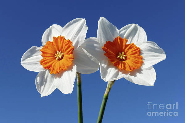 Photograph - The Joy Of Spring  by Phil Banks