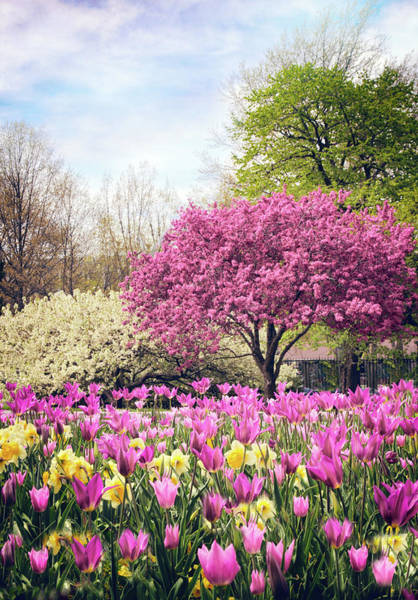 Photograph - The Joy Of Tulips by Jessica Jenney