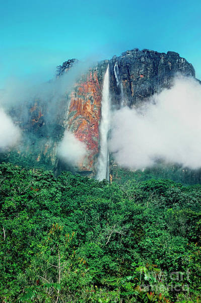 Photograph - The Jungle Surrounds Angel Falls And Tropical Rainforest Canaima Np Venezuela by Dave Welling