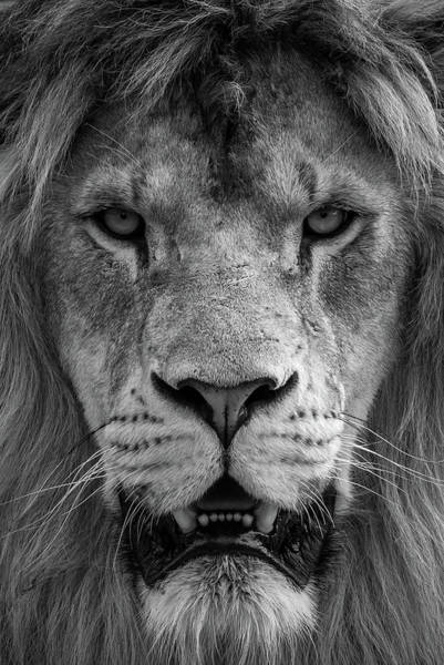 Photograph - The King by Tazi Brown