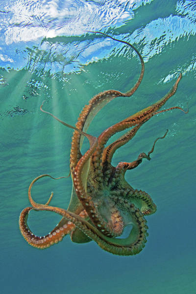 Wall Art - Photograph - The Kraken by James Roemmling