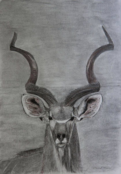Drawing - The Kudu by Dawid Theron