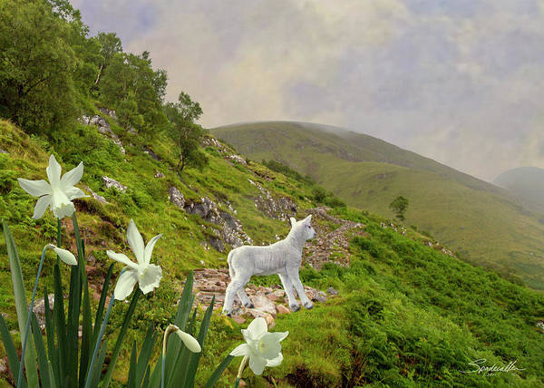 Wall Art - Digital Art - The Lamb And Wild Daffodils by M Spadecaller