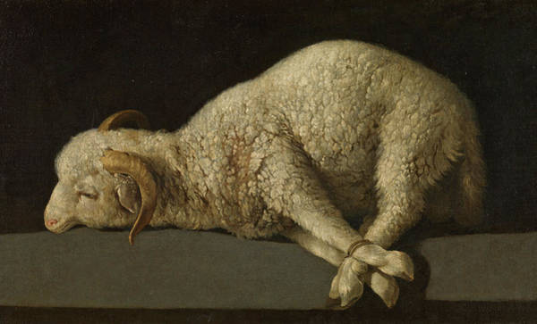 Wall Art - Painting - The Lamb Of God, Agnus Dei by Francisco de Zurbaran
